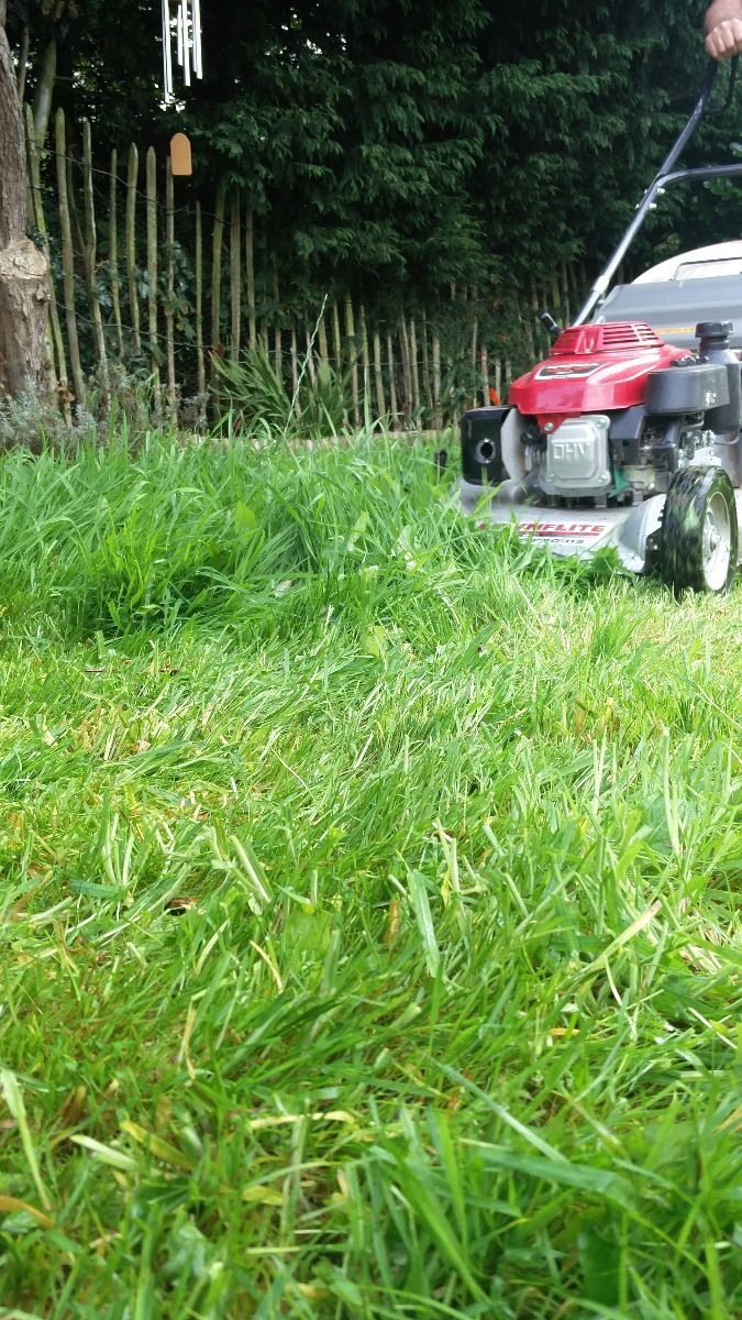 Lawncare Moss weeds and turf hardening Inc grass Green up and scarifying or aeration