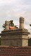 Bird spiking between chimney pots